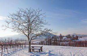 landschaft_winter_parkhotel_landau_66588371