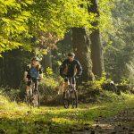 hotelangebot mountainbike touren pfälzer wald
