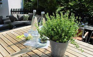 Kräutergarten- Tagung outdoor