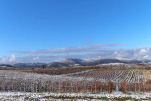 Winterliche Weinberge in der Pfalz