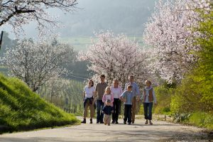 wandern kirschblüte südpfalz landau