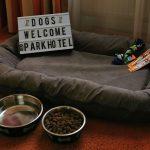 Hundefreundliches Hotel Pfalz Urlaub