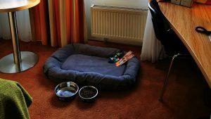 Urlaub Hundefreundlich Pfalz Hund