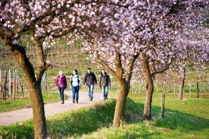 Wandern Südpfalz Hotelarrangement Landau Urlaub