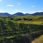 Südliche Weinstrasse RS5681 20161005 182055 Lpr 1920 1024x640
