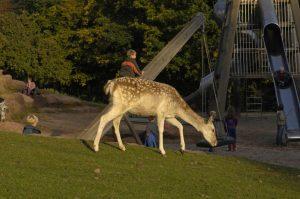 Wild- und Wanderpark Silz bei Landau